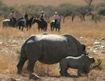 medium_Randocheval-swaziland1.jpg