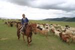 mongolie,voyage,nomade,yourte,transhumance,cheval,randonnée,rando,randocheval