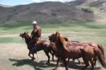 mongolie,voyage,cheval,voyage en mongolie,randonnée équestre, randonnée à cheval