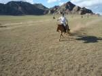 mongolie, endurance, raid, randocheval, rando, cheval, nomades